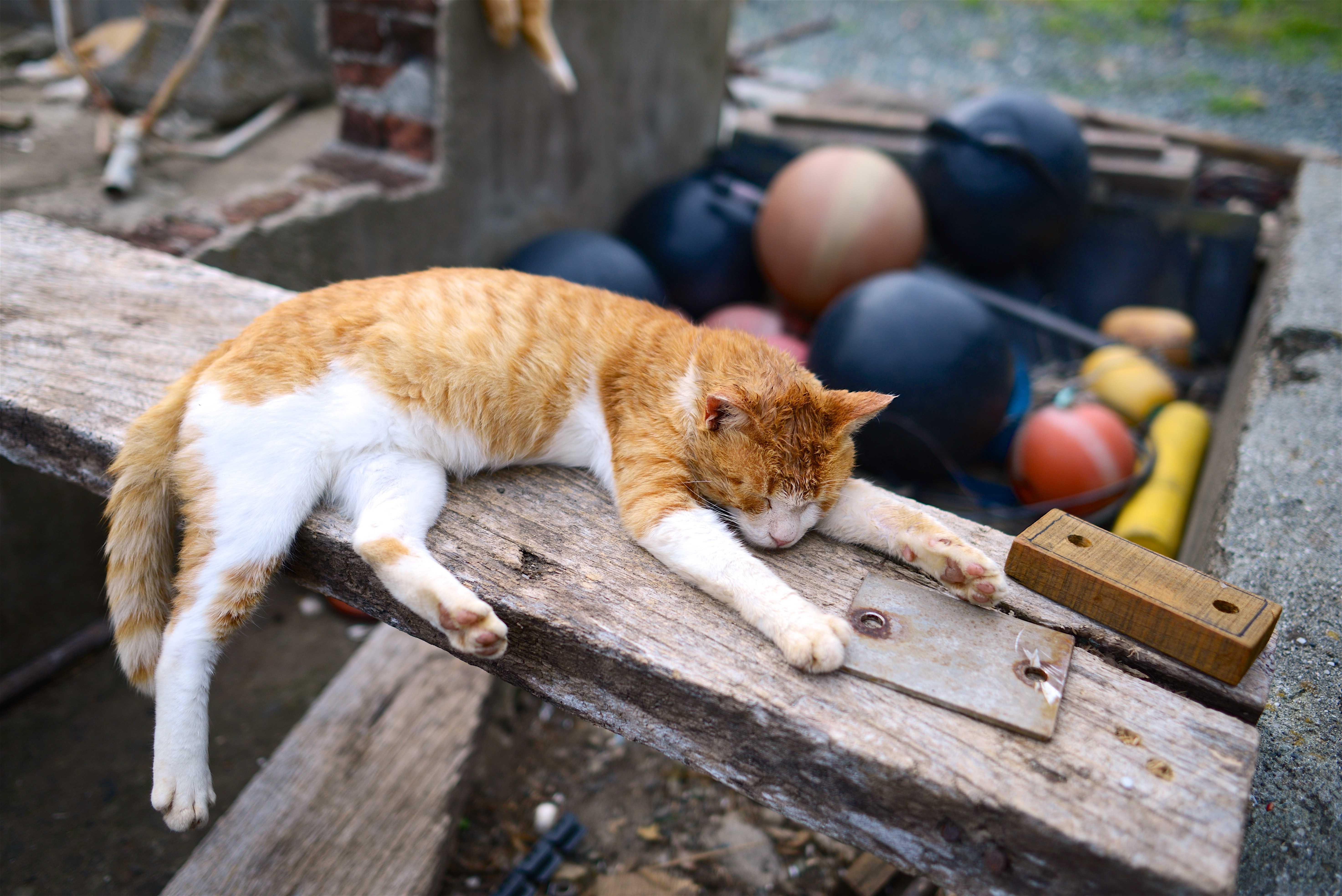 кошки дарят успех