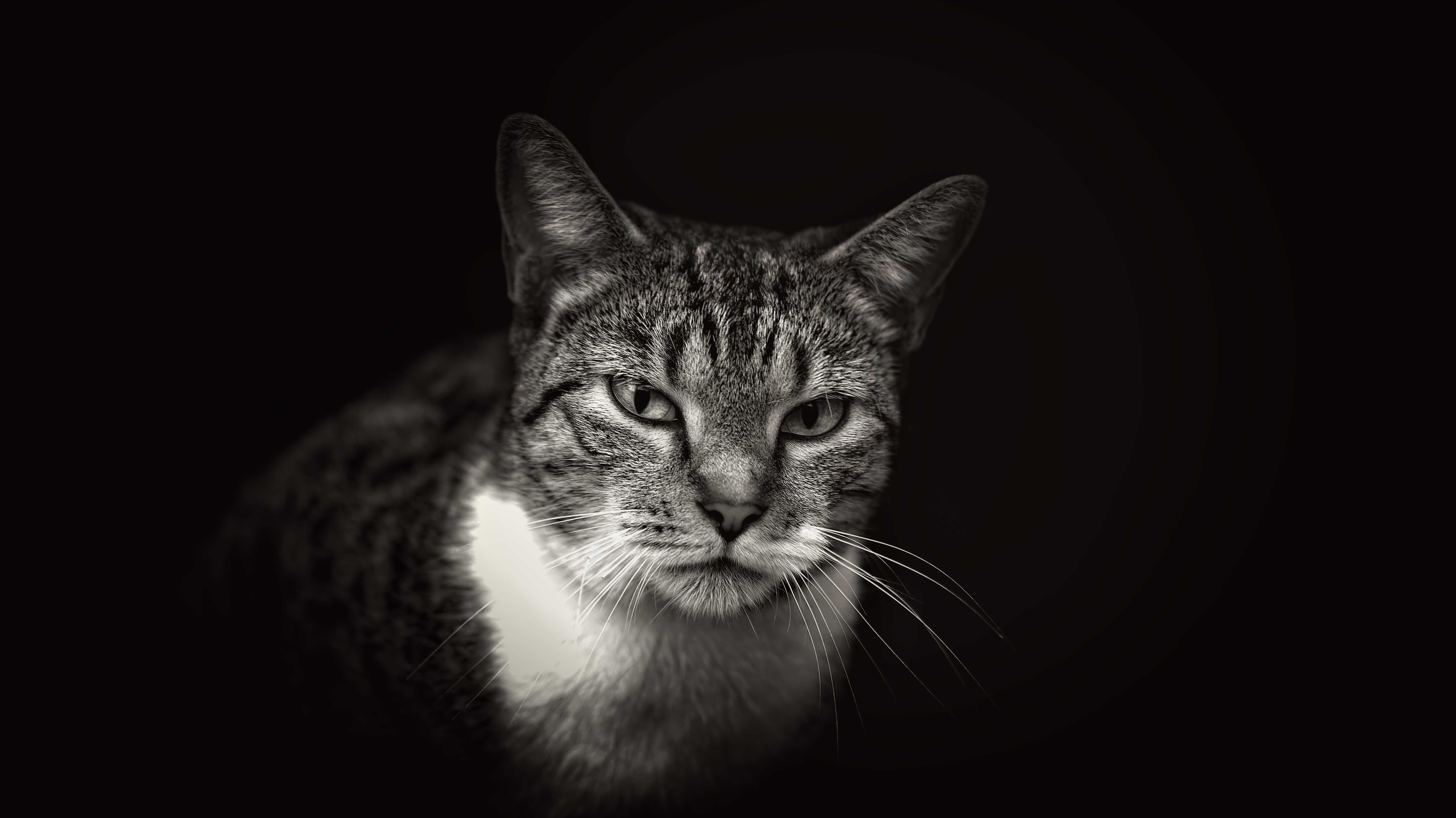шерсть кота