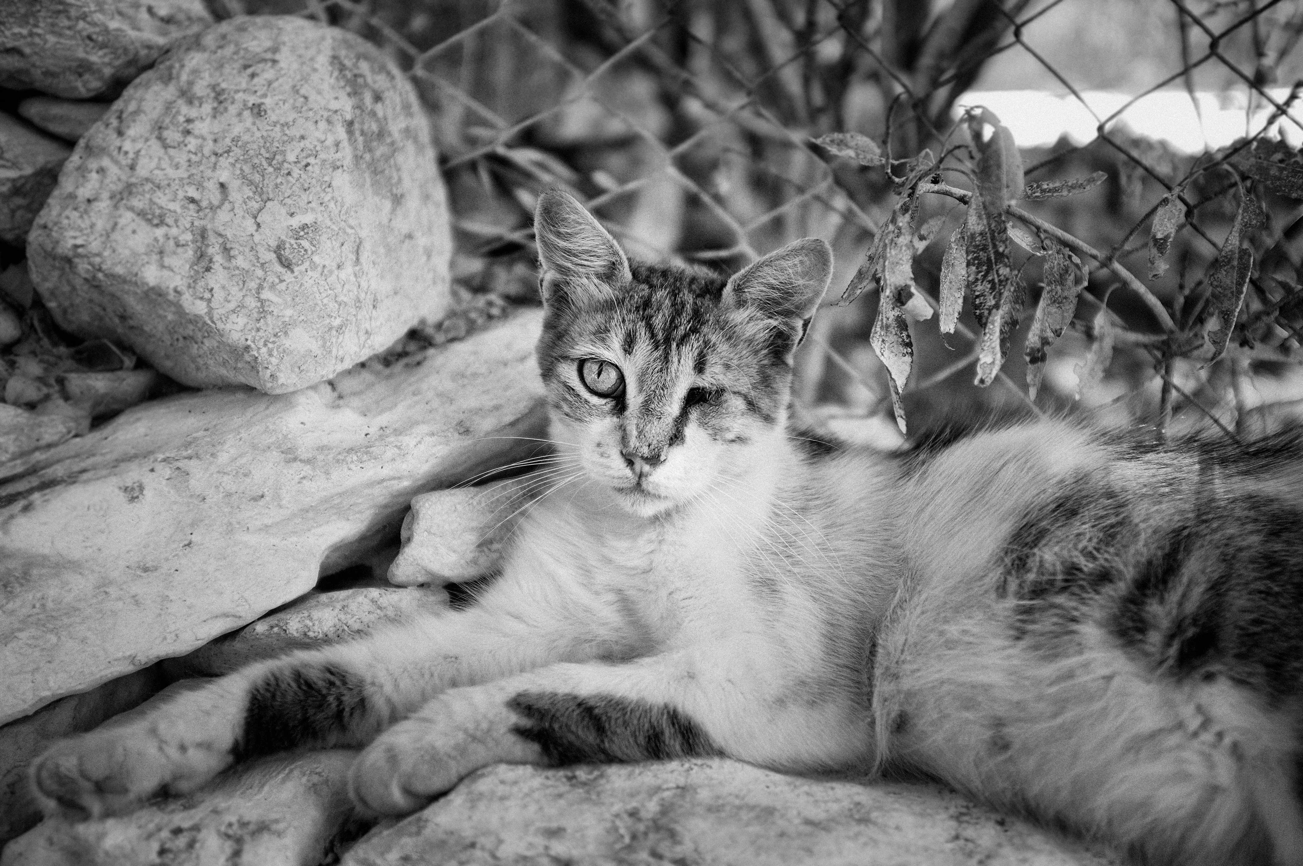 кошка астральный защитник