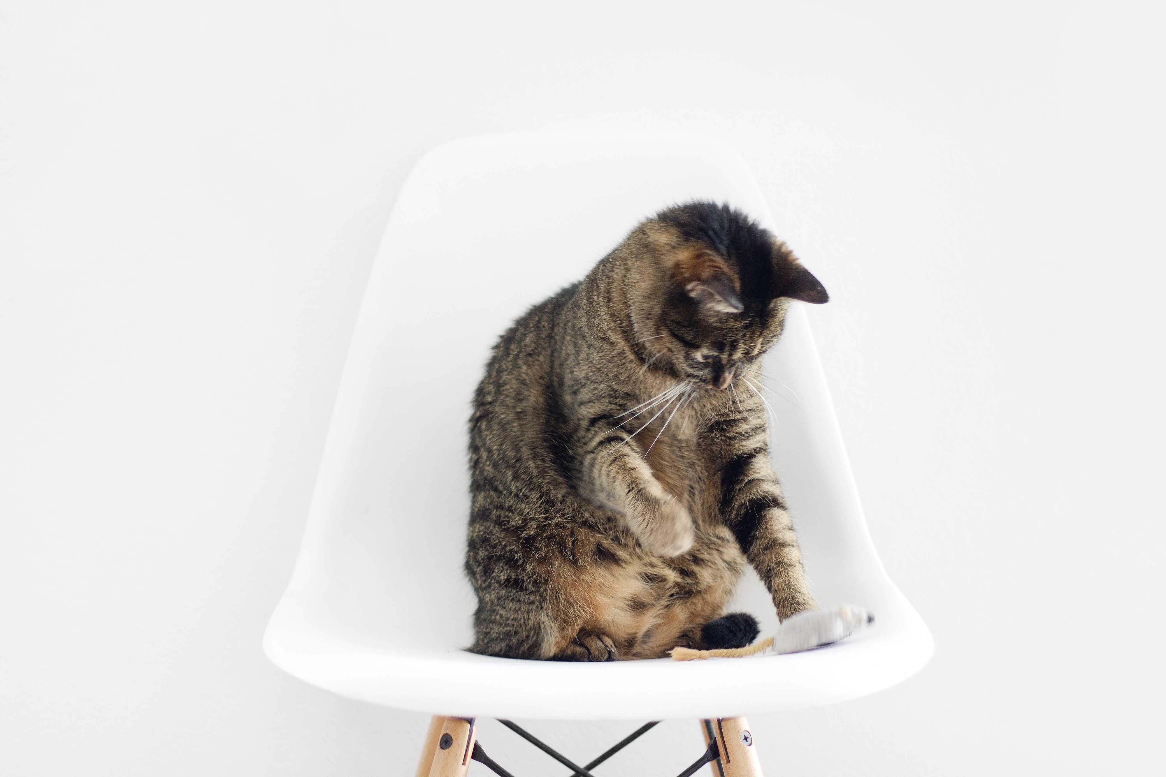 народная примета о кошках