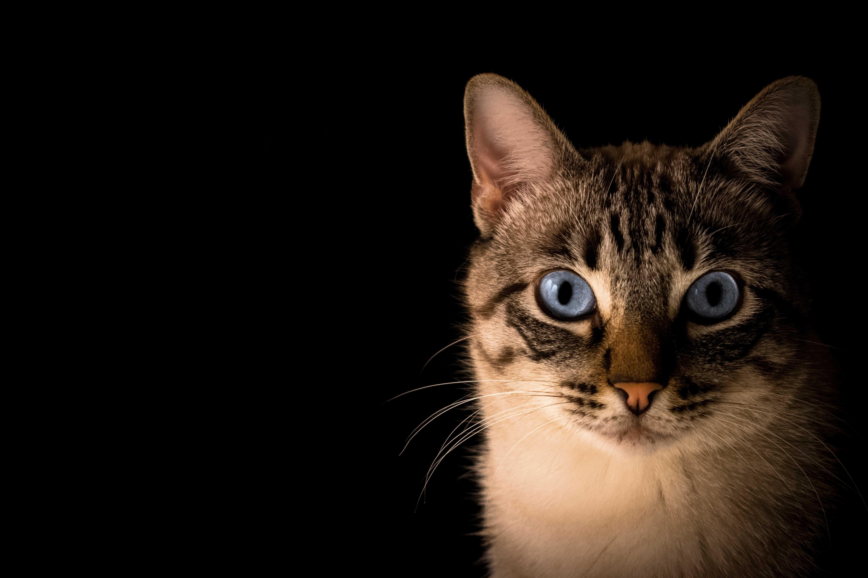 поверья о кошках