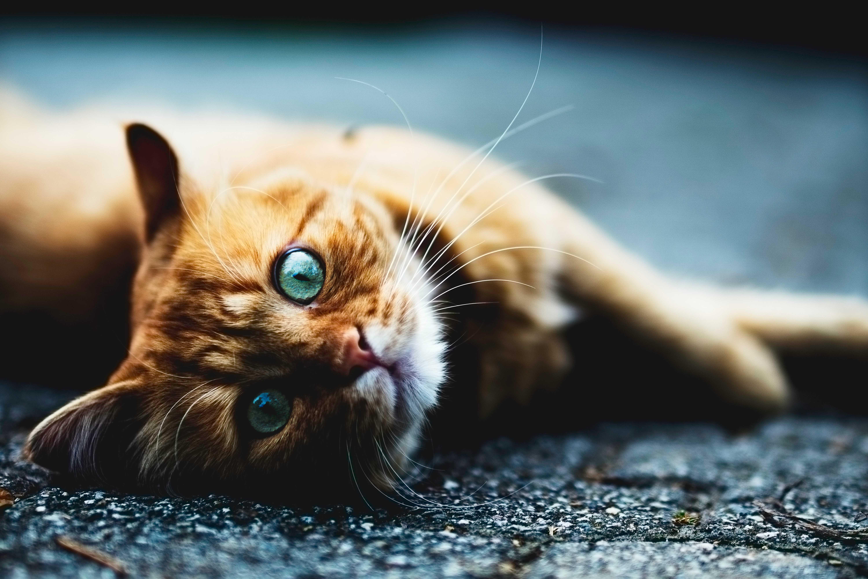 магическая сила кошек