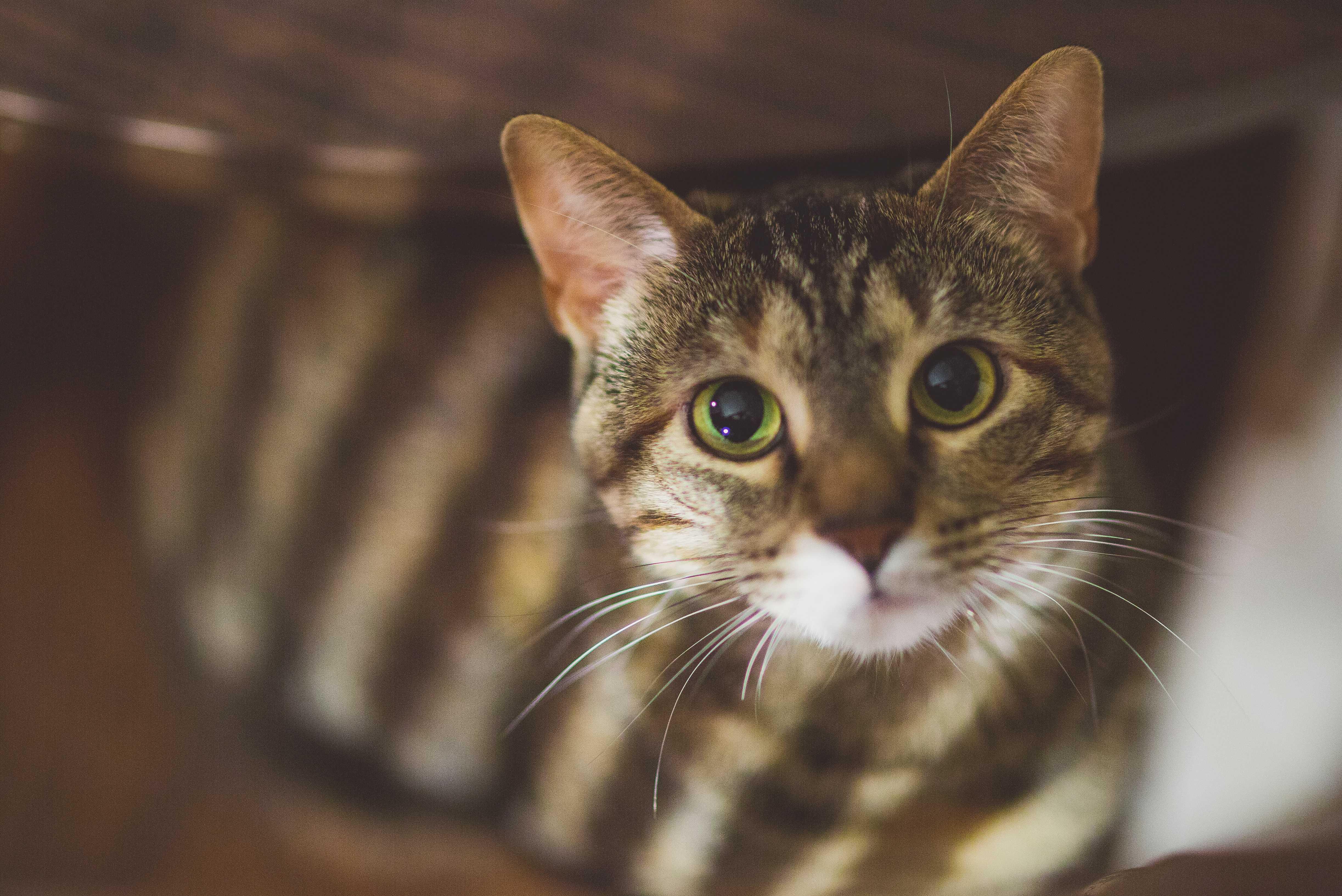 Энергетически кошки