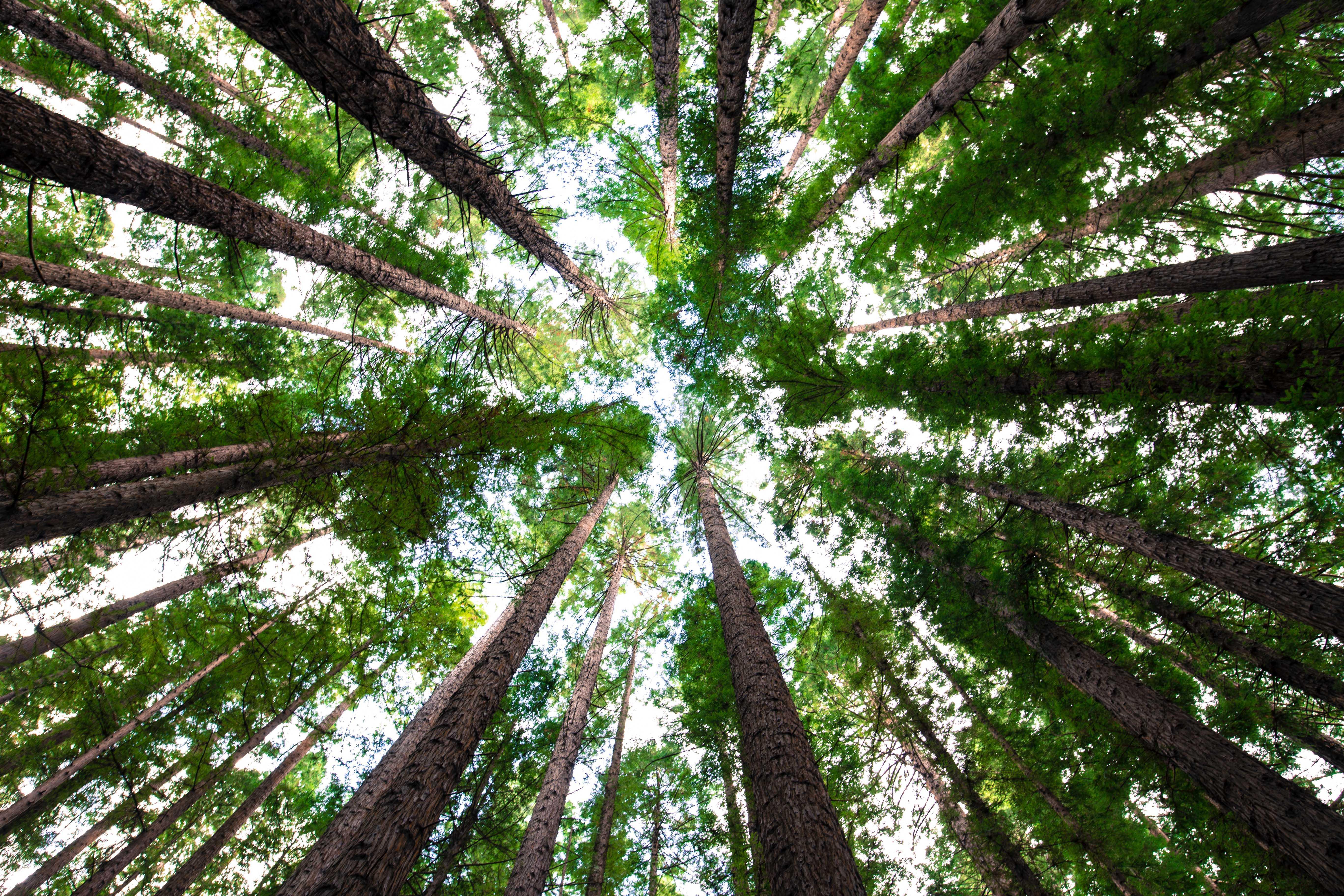 лесной бес Енарей