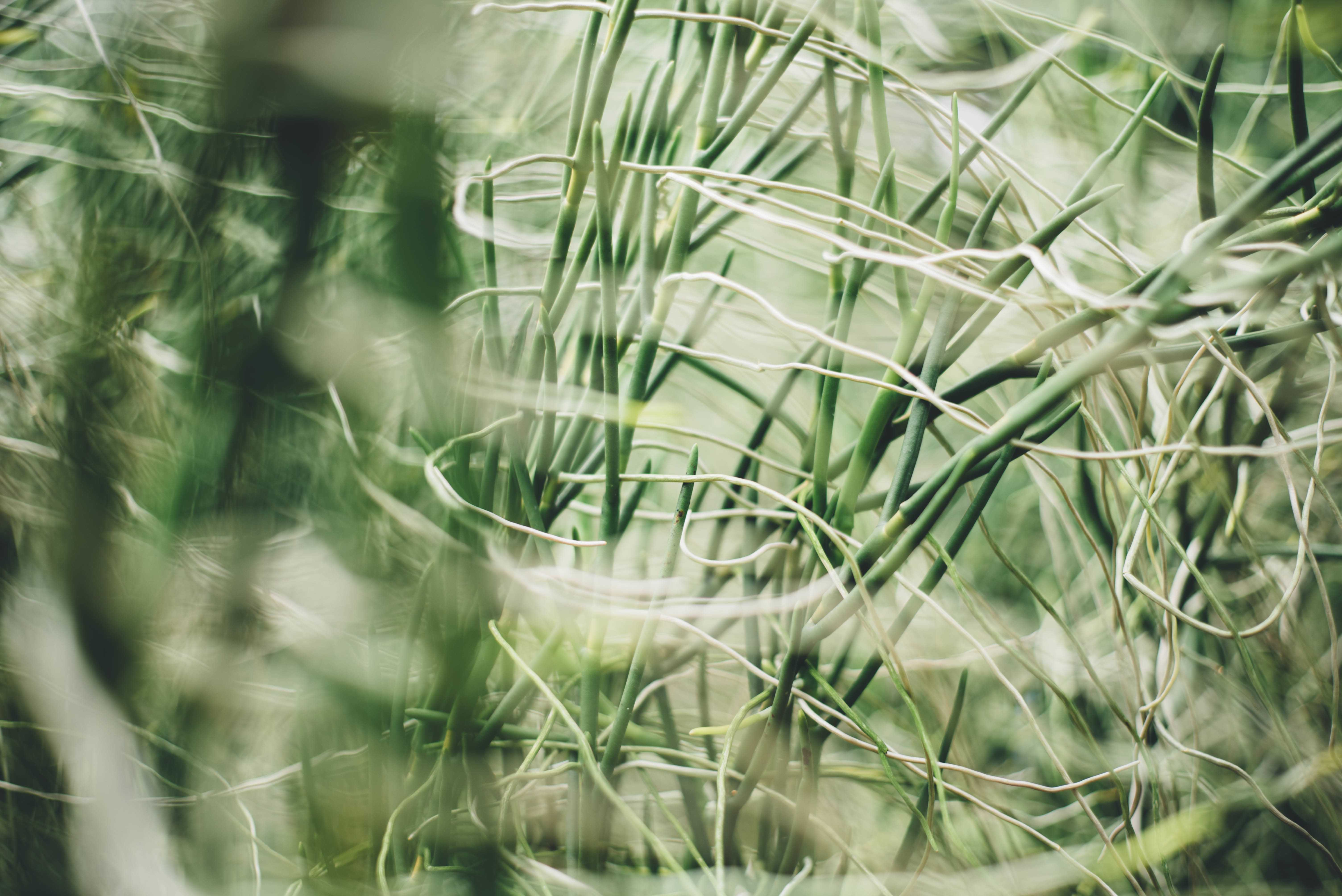 талисман бамбук